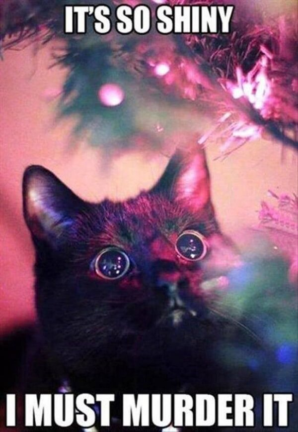 shinny cat