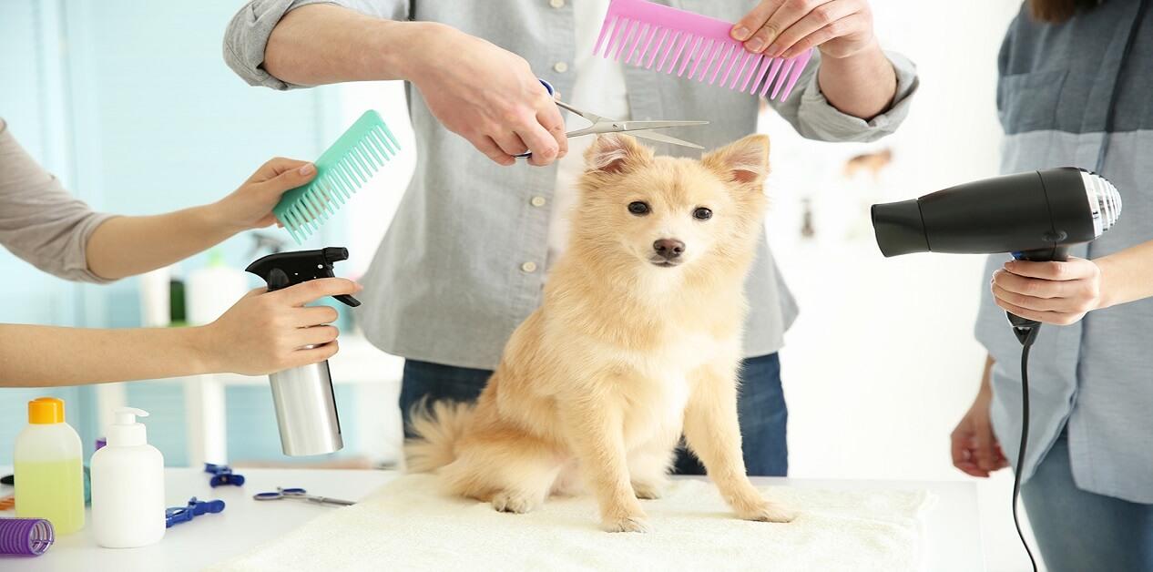 teddy bear haircut for dogs