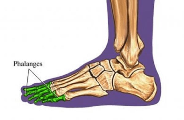 bone of toes