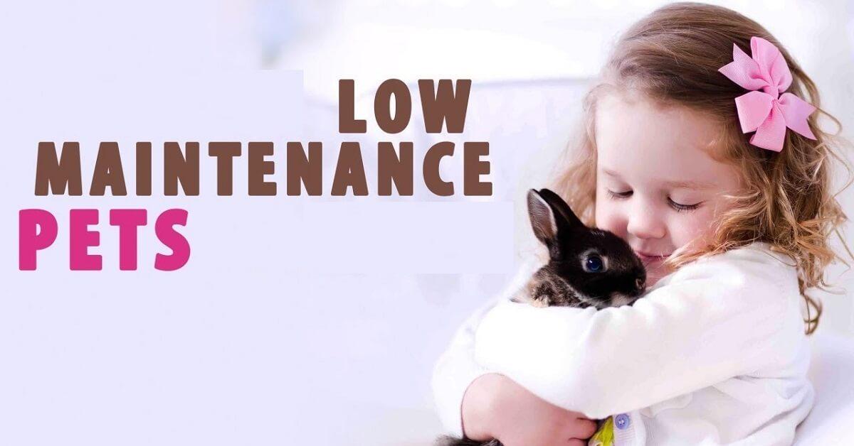 best low maintenance pet