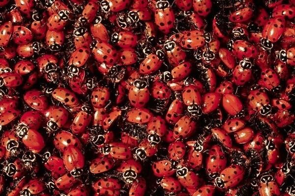 buy some ladybugs