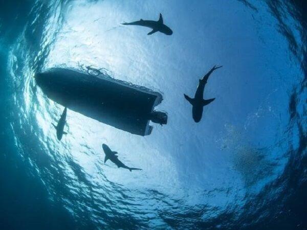 find yourself encircled by huge sharks