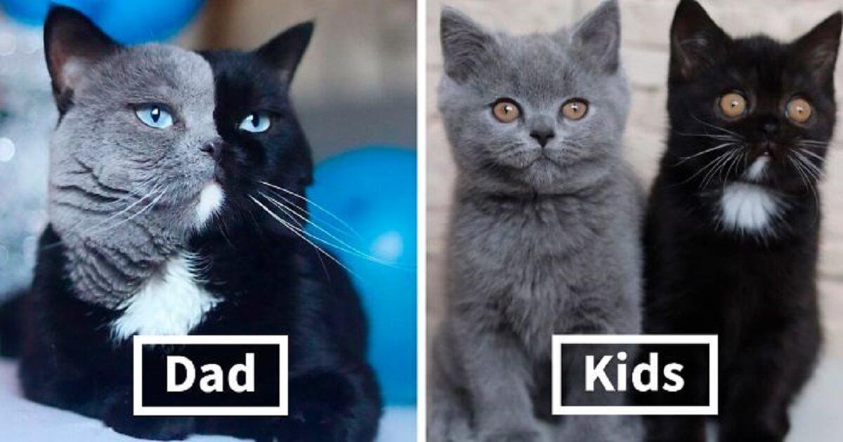 split face cats