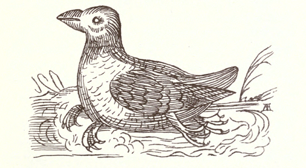 Four-footed Duck