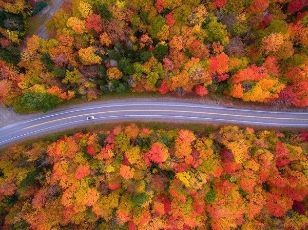Multicolored trees