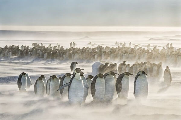 Penguins in the storm