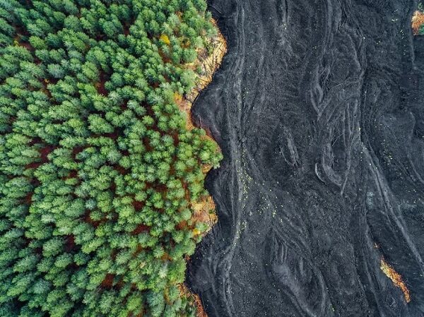 Solidified lava and forest
