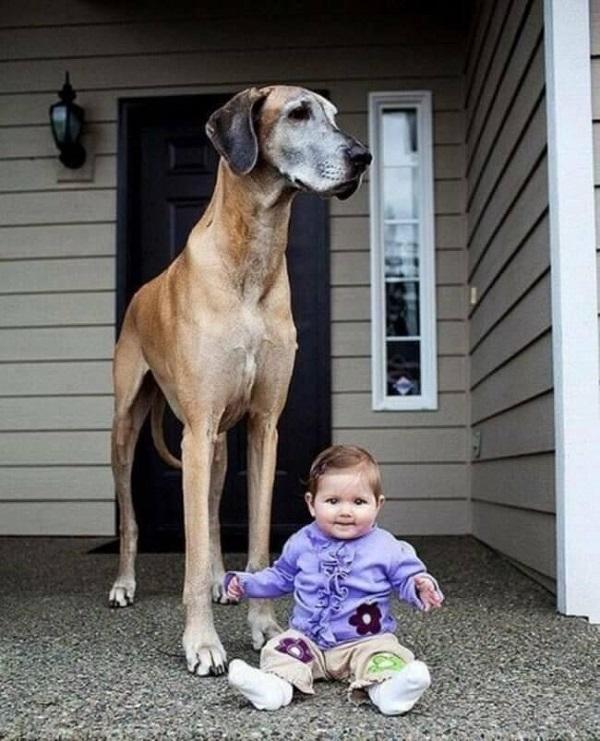 APOLLO of Dogs