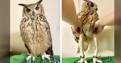 Owl community