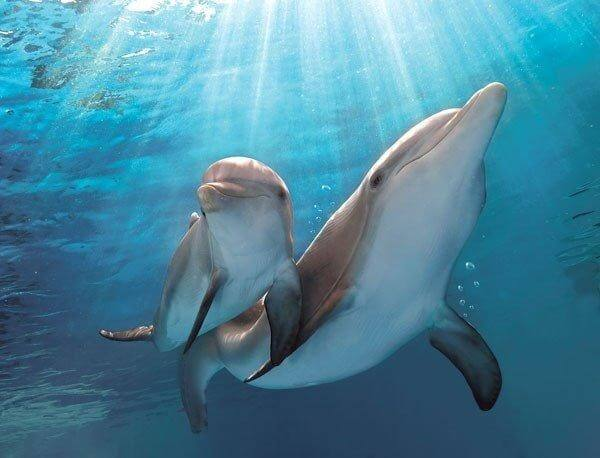 Smart Baby Dolphins