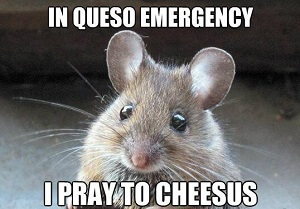 Have you ever prayed for Cheesus