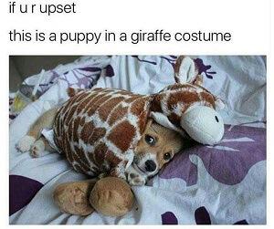 Puppy in a giraffe