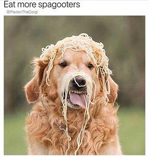 Spagooters