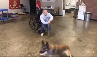 dog test 2