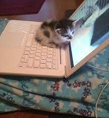 focus kitty
