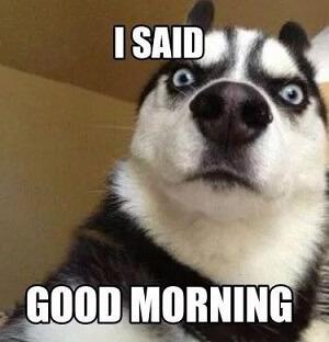 said-good-morning-meme