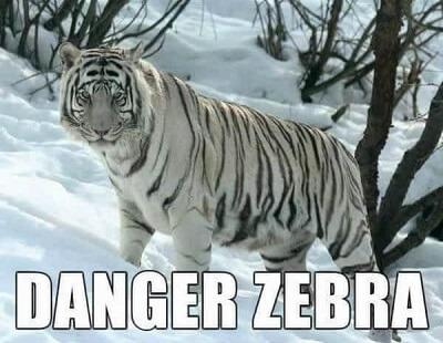 danger zebra