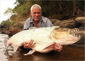 Goliath Tigerfish – Hydrocynus Goliath