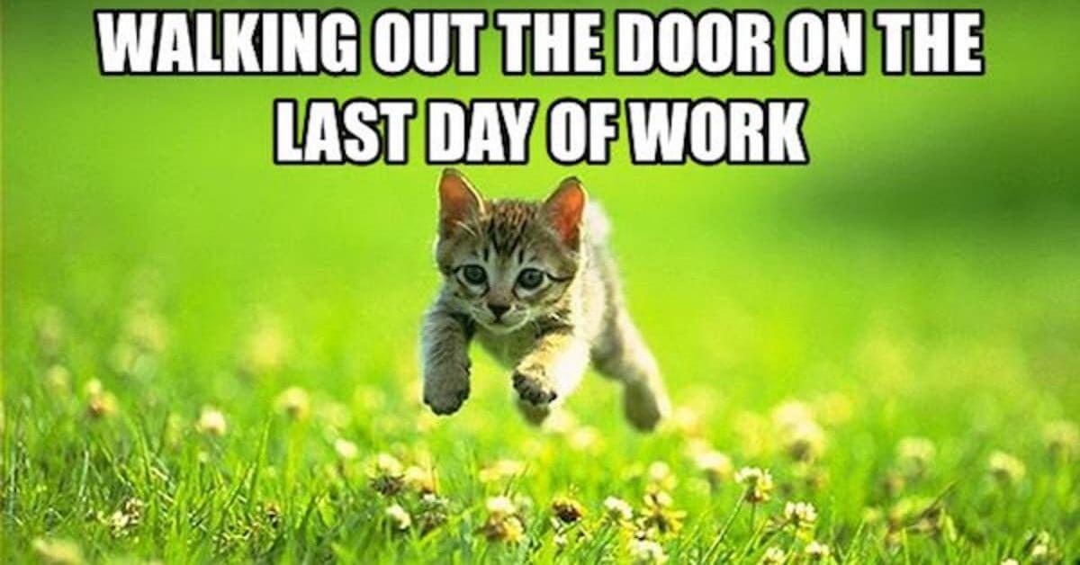 last day at job meme